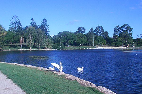 昆士蘭大學休閑地之一-小湖。(大紀元攝影)