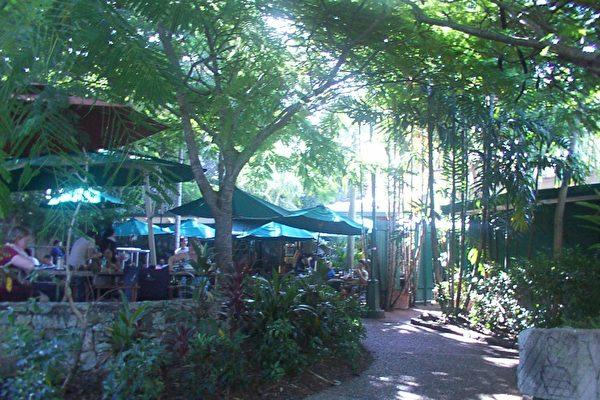 昆士蘭大學充滿田園情趣的咖啡店和書店。(大紀元攝影)