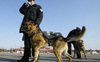 中共警察带警犬在天安门巡逻。(法新社)