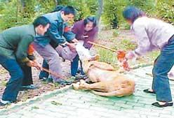武汉野生动物园10岁女童狮口脱险