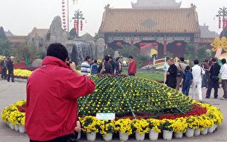 組圖:開封菊花「大哥大」 一棵開5000多頭