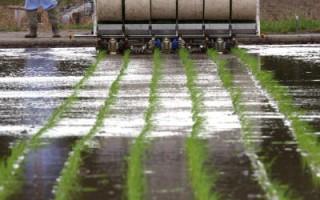 日本开发配备有全球卫星定位系统的自动稻田播种机,能自动按事先定好的路线播种(Getty Images 2004-9-21)