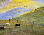 加州死亡谷国家公园满山满谷绚烂夺目的野花/Getty Images