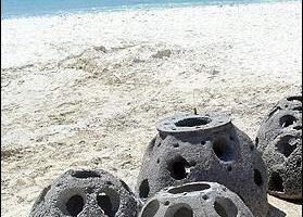 世界保育联盟:南亚海啸珊瑚损害远比预估轻