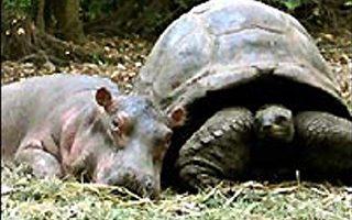 河马欧文与海龟玛基的忘年之交