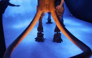 让史前动物复活 冰原历险记2破亿美元票房
