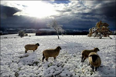 德國首次在牛羊牧場發現藍舌病病例