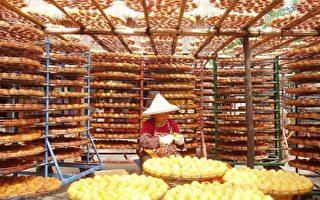 今年新埔柿子产量400万台斤,将可制作出100万台斤的柿饼。(大纪元记者林宝云摄影)