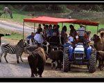 維州野生動物園內提供觀賞動物的蓬車。(圖片提供﹕維州野生動物園網站)