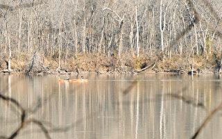 两位居民在星期天早上于费郡波多马克河靠近Algonkian公园的地方泛舟。该地区接近于费尔法克斯水公司入水口。(图片提供:Robbie Hammer/The Connection)