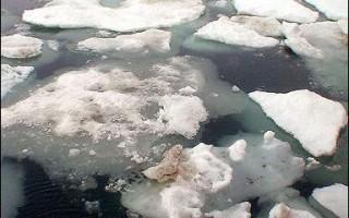 研究:北冰洋冰原可能在二零八零年前溶化