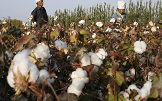 中共自尝苦果 全球时尚产业禁用新疆棉花