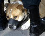 恶犬在公园攻击小狗主人袖手旁观