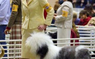 舊金山狗狗展上週末在牛宮舉行