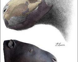 史前鼠王 南美出土巨鼠化石体重达一吨