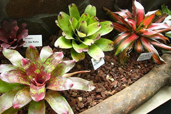 五种植物 净化室内空气效果一级棒