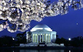 組圖:旅遊藝廊--華盛頓櫻花季