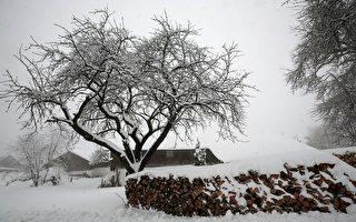 组图:德国三月降大雪