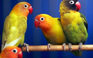 鸚鵡會說話 趣事一籮筐