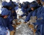 伊朗首都德黑兰利用鸵鸟肉制造全球最长的三明治,图为,工作人员在制作过程。(ATTA KENARE/AFP/Getty Images)