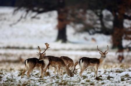英国第一场雪(Getty Images)