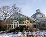 Allan Gardens室内植物园(摄影:艾文/大纪元)