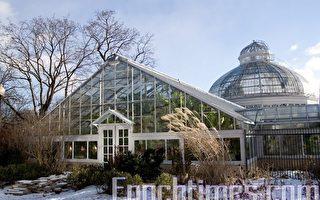 組圖:多倫多艾倫植物園聖誕花卉展