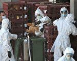 穿上防護衣物的漁護署人員,前日到長沙灣家禽批發市場,撲殺裏面1萬多隻活雞。(AFP)