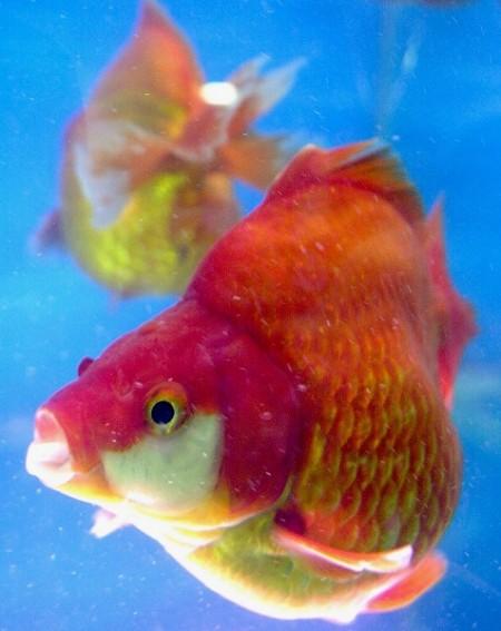 魚有記憶和學習能力(法新社)