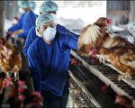 研究人員透露即使流感病毒變異,這最新的流感疫苗仍然有效(法新社)