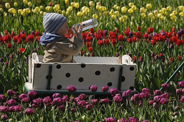 花粉症主要是因樹木及花草所傳播的花粉所引起的季節性過敏。患者會有打噴嚏、流鼻水、眼、鼻、喉發癢及流淚等症狀。而春夏之交正是花粉症肆虐的季節,如何將花粉症的困擾降至最低格外重要。(THEO HEIMANN/AFP/Getty Images)
