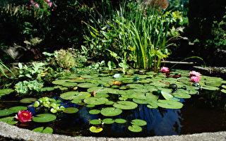 建造庭院池塘(上)