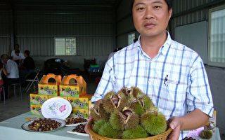 台湾原生种栗子,黄金色泽果实饱满,富纤质、钙质、维生素、荷尔蒙。 (摄影:苏泰安/大纪元)