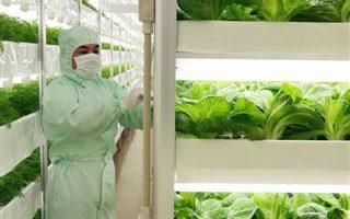 澳洲科学家发明新型超级蔬菜