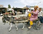 新疆一个维族家庭骑着驴车前去赶集。说土耳其语的穆斯林维吾尔人,在塔克拉玛干沙漠的绿洲上已生活了两千多年,驴车是他们最常见的交通工具,丝绸之路就从这里经过。(AFP)