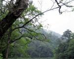 山川綿延潤我千年的身軀,日月天籟惠我寂寞的枝葉。(圖:大紀元)