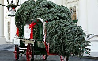 美夫婦種冷杉 四次獲選白宮聖誕樹