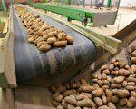 土豆从欧洲走向了世界(FRANCOIS NASCIMBENI/AFP)