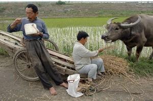 何清漣:中國農村是通向「新農村」還是「救亡」?