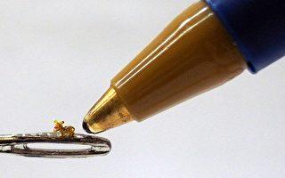 豪芒雕刻世界最小老虎,长0.12宽0.06高0.1公分,放在缝衣针上,比笔尖还小!(陈逢显提供)