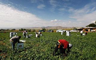 美国移民占劳动人口六分之一