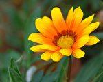 """植物知道人在想什么,说明植物收到了""""思想灵体""""的能量。(摄影:王嘉益 / 大纪元)"""