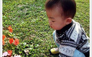 苹果和胖子:卢卡斯与范团
