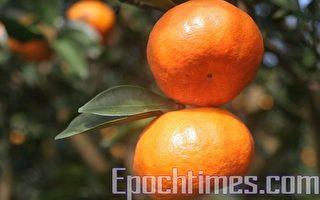 【厨房小百科】吃橘子不剥橘子皮