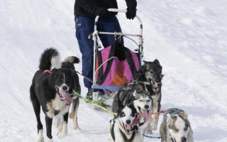 组图:德国黑森林贝尔瑙国际狗拉雪橇比赛登场