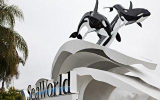 美佛州海洋世界 杀人鲸攻击女训练师