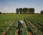 科罗拉多州农场(Photo by John Moore/Getty Images)
