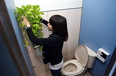 绿美化兼净空气   台环署推植栽净化居家空品秘诀