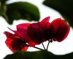 沒有陽光的花朵注定提早枯萎,不能宣洩的江水注定潰堤成災。(圖:大紀元)