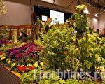 """多伦多市府的""""社区花园"""",有树、花,也有蔬菜及瓜果(摄影:周行/大纪元)"""